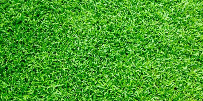 דשא סינטטי באולם אירועים